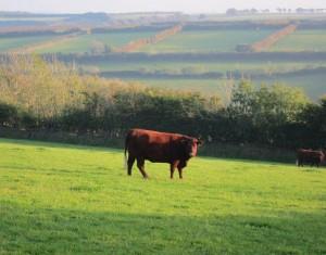 Ashott Barton Farm near Exford, England