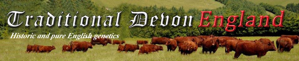 Traditional Devon English - Historic and pure English genetics